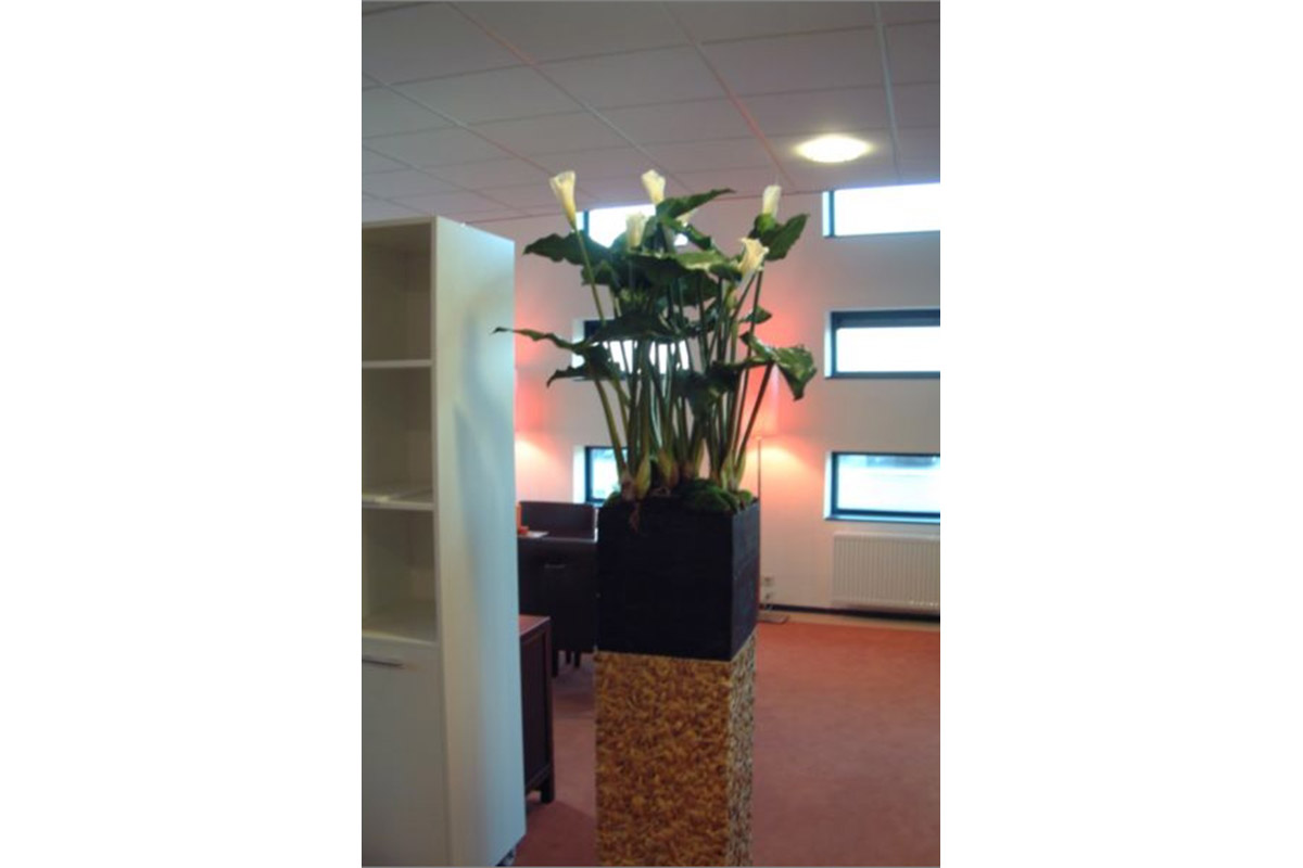flowers in contemporary office